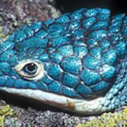 Green Arboreal Alligator Lizard Art Print