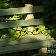 Green Bench Art Print