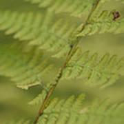 Green Ferns Blend Together Art Print