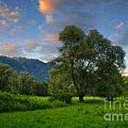 Green Field With Trees Art Print