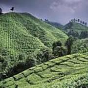 Green Fields On Hills Art Print