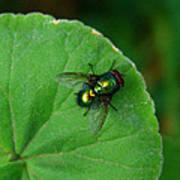 Green Fly Art Print