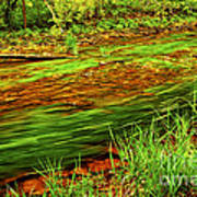 Green Forest River Art Print