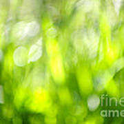 Green Grass In Sunshine Art Print by Elena Elisseeva