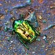 Green Junebug Art Print