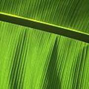 Green Leaf, Close-up Art Print