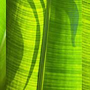Green Leaf Print by Setsiri Silapasuwanchai