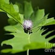 Green Oak Leaf And Flower Art Print