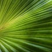 Green Palm Art Print by Al Hurley