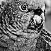 Green Parrot - Bw Art Print