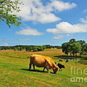 Green Pasture Art Print by Catherine Reusch Daley