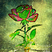 Green Rose Art Print