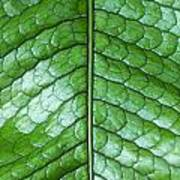 Green Scaly Leaf Pattern Art Print