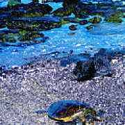 Green Sea Turtle Honu Art Print