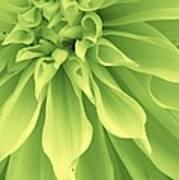 Green Sherbet Art Print