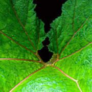 Green Spider Leaf Art Print