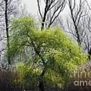 Green Tree And Pampas Grass Art Print