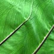 Green Veiny Leaf 2 Art Print