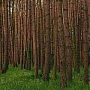 Greening In The Woods Art Print