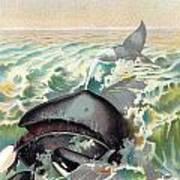 Greenland Whale Art Print