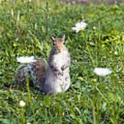 Grey Squirrel Print by Georgette Douwma