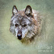 Grey Wolf Portrait Art Print