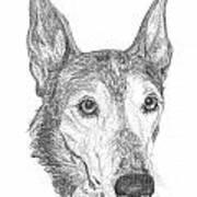 Greyhound Art Print by Deb Gardner