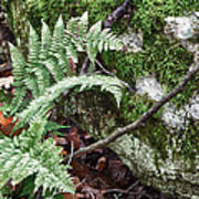 Ground Foliage Near Mountain Lake Art Print