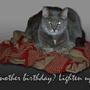 Grumpy Cat Birthday Card Art Print