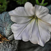 Grundgy Petunia Art Print