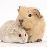 Guinea Pig And Hamster Art Print