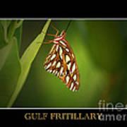 Gulf Fritillary 2 Art Print