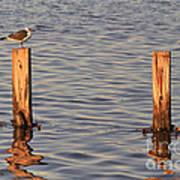 Gull At Sunset Art Print