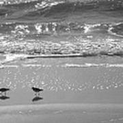 Gulls Taking A Walk Art Print