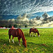 Hailey's Horses Art Print