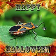 Halloween Greeting Card - Box Elder Bug Art Print