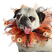 0062b529 Halloween Pug Art Print by Mlorenzphotography