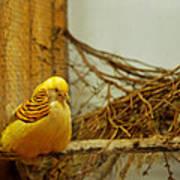 Halloween Yellow Bird Art Print