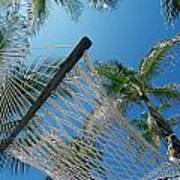 Hammock And Palm Tree, Great Barrier Art Print