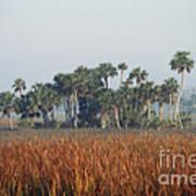 Hammock, Everglades National Park Art Print