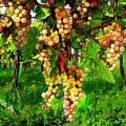 Hanging Grapes On The Vine Art Print by Elaine Plesser