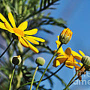 Happy Daisies Art Print by Kaye Menner