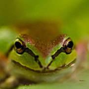 Happy Frog Art Print