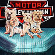 Harley Dogs Art Print by Carolyn Ardolino