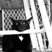 Harry One Twisted Cat Art Print