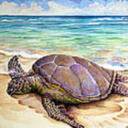 Hawaiian Green Turtle Art Print