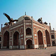 Hawk Flying Next To Humayun Tomb Delhi Art Print