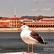hd 384 hdr - Lone Seagull Art Print