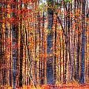 Hdr- Autumn Leaves Art Print