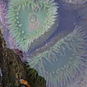 Heart Of The Tide Pool Art Print